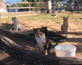 Organización proteccionista propone trueque de accesorios por alimentos para gatos