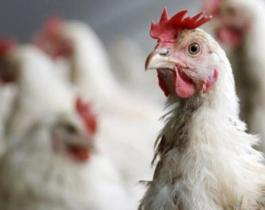 China reportó otro caso humano contagiado con gripe aviar
