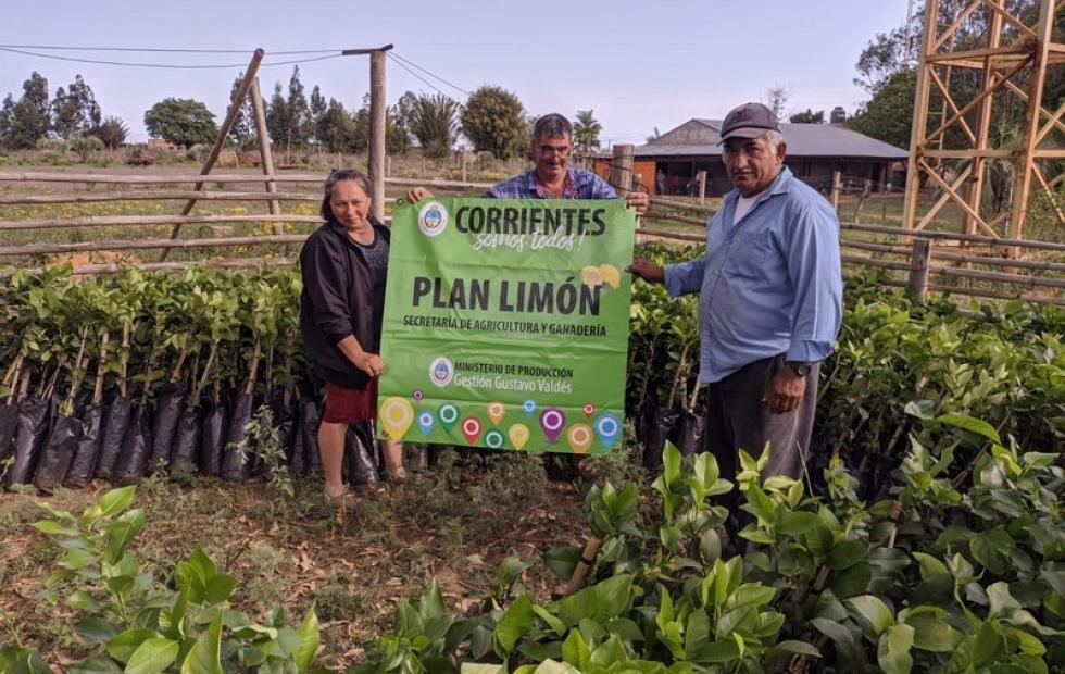 El Plan Limón llegó a Santa Rosa con 3.200 plantines