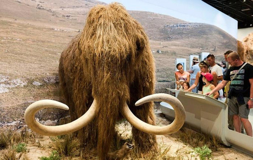 Harvard recauda U$s 15 millones para revivir al mamut lanudo