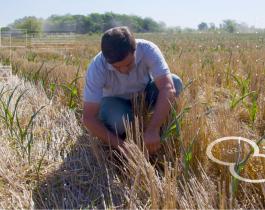 Aseguran que el Estado se queda con el 63,4% de la renta agrícola