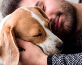 Luto animal: un proyecto propone una licencia de dos días por la muerte de una mascota